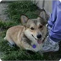 Adopt A Pet :: Parker - Inola, OK