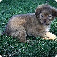 Adopt A Pet :: Birdie - Broomfield, CO