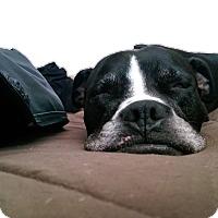 Adopt A Pet :: Jupiter - Gilbert, AZ