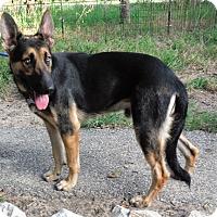 Adopt A Pet :: FINNLEE - SAN ANTONIO, TX