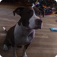 Adopt A Pet :: Reese (COURTESY POST) - Baltimore, MD