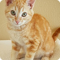 Adopt A Pet :: Trent - Fredericksburg, TX