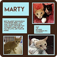 Adopt A Pet :: Marty - CLEVELAND, OH