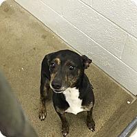 Adopt A Pet :: Trip - Paducah, KY