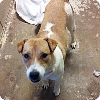 Adopt A Pet :: Tasha - Ashland, AL