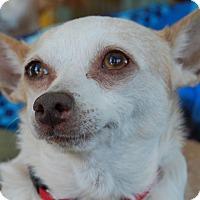 Adopt A Pet :: Claire - Creston, CA