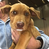 Adopt A Pet :: Little Red - Sagaponack, NY