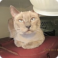 Adopt A Pet :: Amia - Long Beach, CA