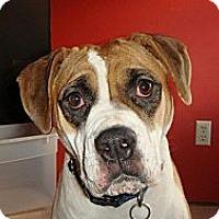 Adopt A Pet :: Penny - Elderton, PA