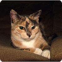 Adopt A Pet :: Katrina - Norwich, NY