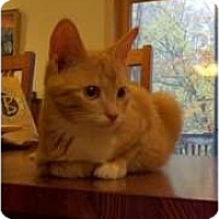 Adopt A Pet :: Fritz - Cincinnati, OH