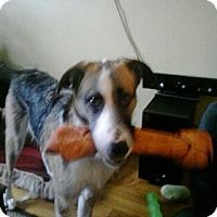 Adopt A Pet :: Turbo - Northumberland, ON