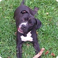 Adopt A Pet :: Blackfoot - Kimberton, PA