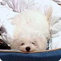 Adopt A Pet :: Shakespeare - East Hanover, NJ