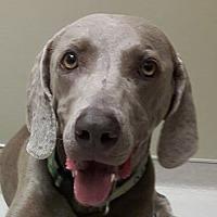 Adopt A Pet :: Bing - Birmingham, AL