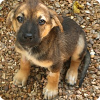 Adopt A Pet :: Carmel - Norwalk, CT