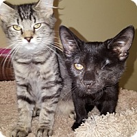 Adopt A Pet :: Barney - Delmont, PA