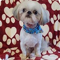 Adopt A Pet :: Whiskey - Lawrenceville, GA