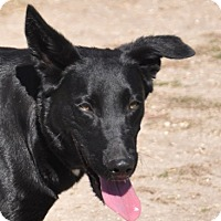 Adopt A Pet :: Daisy - Dripping Springs, TX