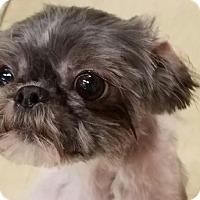 Adopt A Pet :: Ramsey - Ogden, UT