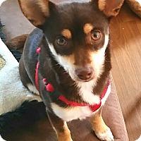 Adopt A Pet :: Davey - Andalusia, PA