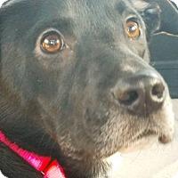 Adopt A Pet :: Trudy - Salamanca, NY