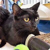 Adopt A Pet :: Jasmine - Toronto, ON