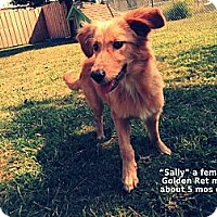 Adopt A Pet :: Sally - Gadsden, AL