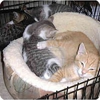Adopt A Pet :: Kittens! - Medway, MA