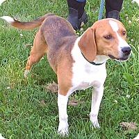 Adopt A Pet :: Lucky - Metamora, IN