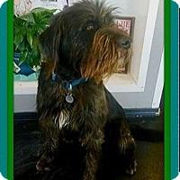 Adopt A Pet :: Zeus - Rancho Cucamonga, CA
