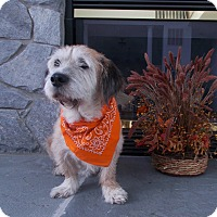 Terrier (Unknown Type, Medium) Mix Dog for adoption in Bluffton, South Carolina - Mr. Shnookles