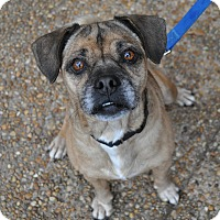 Adopt A Pet :: Elton - Atlanta, GA