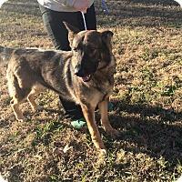 Adopt A Pet :: Happy - Greeneville, TN