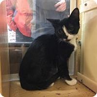 Adopt A Pet :: Le Pew - McHenry, IL