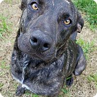Adopt A Pet :: Conor - Hamilton, MT
