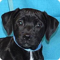 Adopt A Pet :: **LUCIFER** MEET APRIL 1ST! - Mukwonago, WI