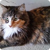 Adopt A Pet :: Layla - Harrison, NY