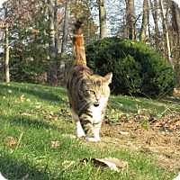 Adopt A Pet :: Trudie (COURTESY POST) - Baltimore, MD
