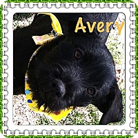 Adopt A Pet :: Avery - Somers, CT