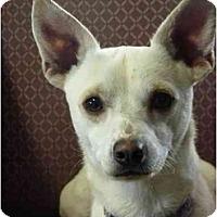 Adopt A Pet :: Tychi - YERINGTON, NV