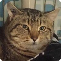 Adopt A Pet :: Harvey - Calgary, AB