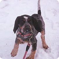 Adopt A Pet :: LADYBUG - Coudersport, PA