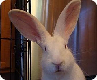 New Zealand Mix for adoption in Woburn, Massachusetts - Elsa