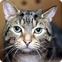 Adopt A Pet :: Doje - New York, NY