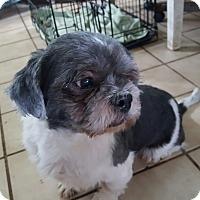 Adopt A Pet :: Olaf - Schofield, WI