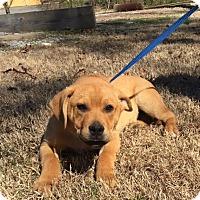 Adopt A Pet :: Earl - Harrisonburg, VA