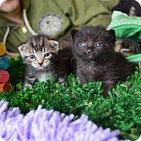 Adopt A Pet :: Wade & Grayson - Brooklyn, NY