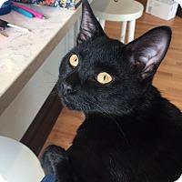 Adopt A Pet :: Marv - St. Louis, MO