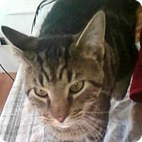 Adopt A Pet :: Hardy - New York, NY
